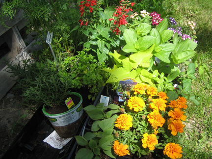GardenMemday
