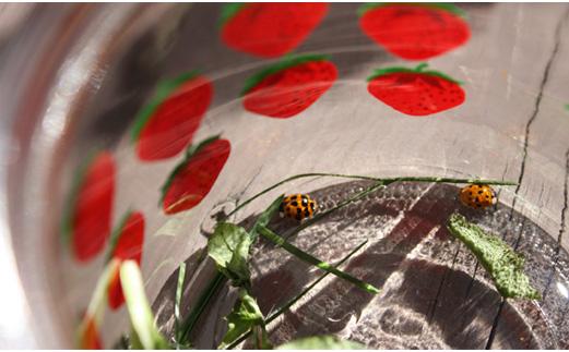 10-11ladybugs