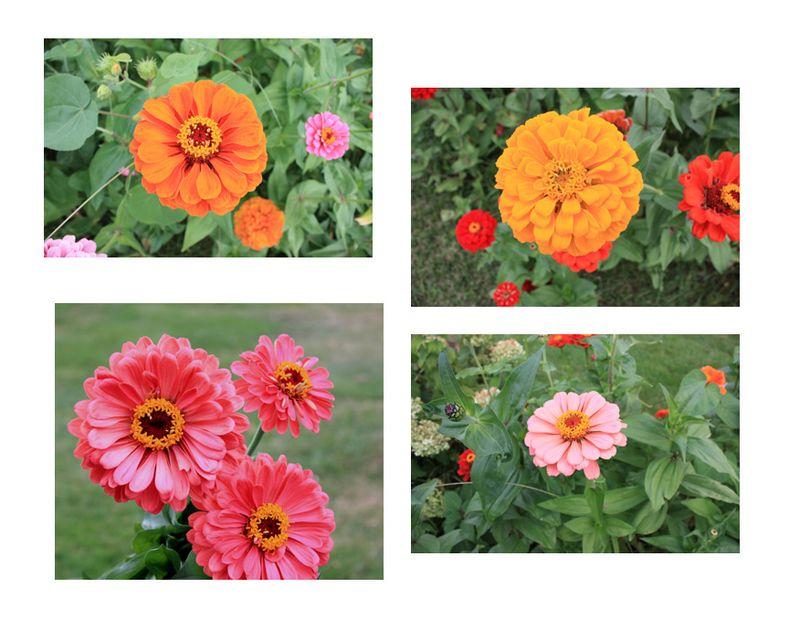 9-5flowers