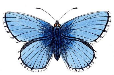 Butterflies blue clip art--graphicsfairy007a